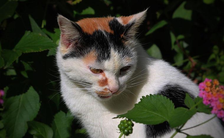 かっこいい猫です。