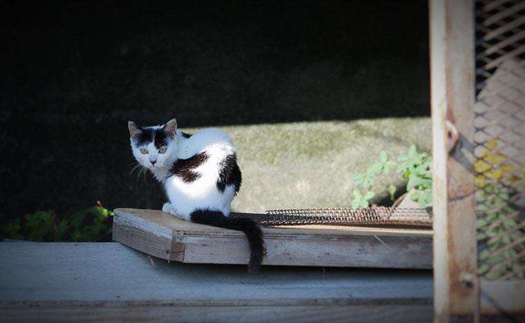 廃屋に佇む猫