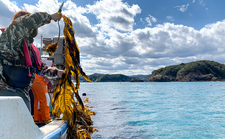 浦村町でワーケーション 一棟貸切民泊の漁師の貸切アジト Anchor.