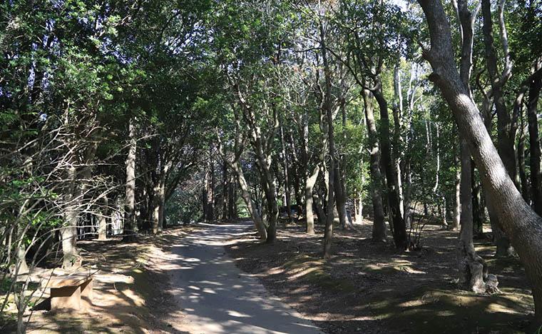 木漏れ日の散歩道